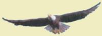 Eagles in Flight Weekend Jan 26-28, 2018