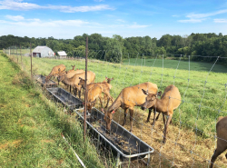 Bugle Valley Elk Farm West of Roachdale