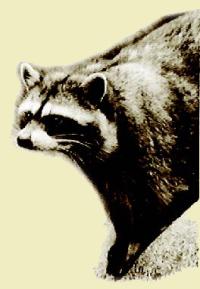 Raccoon Lakeside Lodge Open Year Round